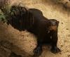 Otter's_Webbed_Feet