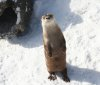 River_Otter_-_Buffalo_Zoo