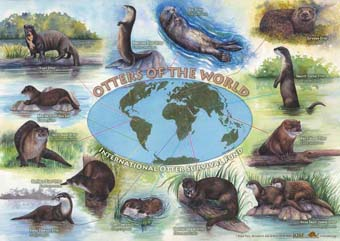 Different kinds of otters